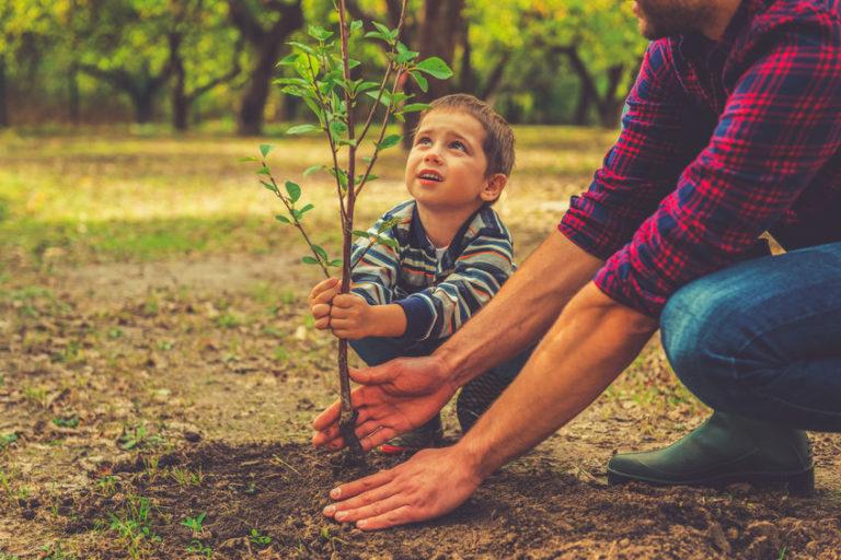 bomenplanten voor een gezond klimaat