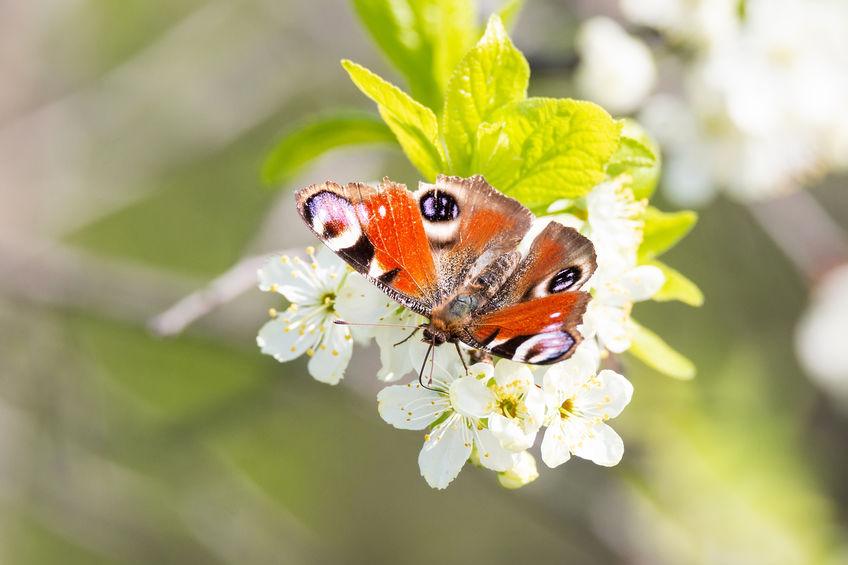 meer dieren door fruit in de tuin