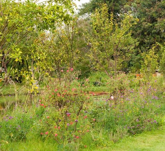inheemse beplanting in de tuin